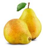 Mogna pears Arkivbilder