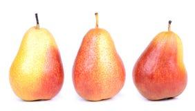 Mogna pears Royaltyfria Bilder