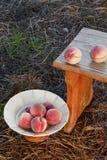 Mogna persikor Fotografering för Bildbyråer