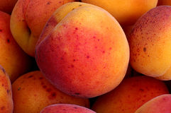 Mogna persikor i en bunke Arkivfoto
