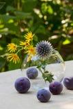 Mogna plommoner och lösa blommor Arkivbild