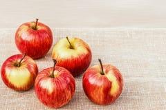 Mogna röd-guling äpplen som ligger på en ljus bakgrund royaltyfria bilder