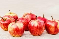 Mogna röd-guling äpplen som ligger på en ljus bakgrund royaltyfri fotografi
