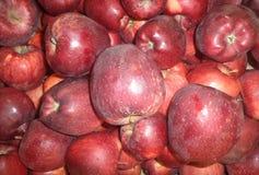 Mogna röda äpplen av den nya skörden arkivbild