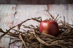 mogna röda äpplen i closeup för torrt gräs Arkivfoto