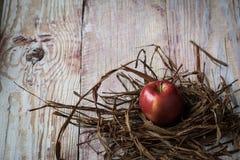 mogna röda äpplen i closeup för torrt gräs Arkivbilder