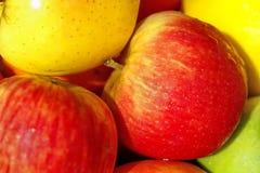 Mogna röda och gula äpplen Arkivfoton