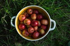 Mogna röda små äpplen i en platta arkivfoto
