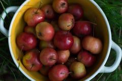Mogna röda små äpplen i en platta arkivbild