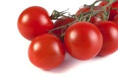 Mogna röda tomater Royaltyfri Fotografi