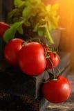 Mogna röda tomater på en filial som ligger på träbakgrund i lantlig stil, det ljusa solljuset i morgonen _ Fotografering för Bildbyråer