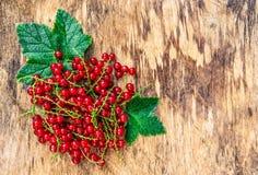 Mogna röda vinbär på ett träbräde Ny våt vinbär Röd vinbär med droppar Gammal träbakgrund och röda bär Fotografering för Bildbyråer