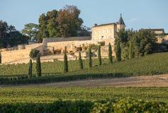 Mogna r?da druvor p? rader av vinrankor i vienyard av Clos La Madeleine f?r vinsk?rden i den Saint Emilion regionen fotografering för bildbyråer