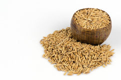 Mogna ris för gul jasmin på vit bakgrund arkivbild