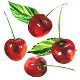 Mogna söta röda körsbär med isolerade gröna sidor, körsbärfrukter, hand dragen vattenfärgillustration på vit Arkivfoto