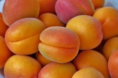 Mogna saftiga aprikors st?nger sig upp royaltyfri bild