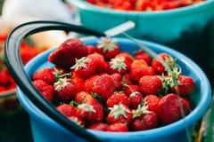 Mogna saftiga jordgubbar i hinkar Arkivfoto