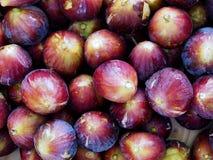Mogna saftiga organiska fikonträd Royaltyfri Bild