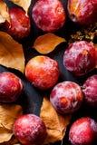 Mogna saftiga stora röda plommoner torkar gula orange sidor på svart stenbakgrund Autumn Fall Composition colors vibrerande Arkivbild