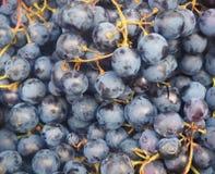 Mogna saftiga svarta druvor i en marknad, bakgrund Arkivfoto