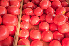 Mogna saftiga tomater på marknaden Fotografering för Bildbyråer