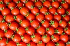 Mogna saftiga tomater arkivfoto