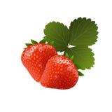 Mogna smakliga jordgubbar med bladet Arkivfoton