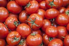 Mogna smakliga röda tomater Organiska tomater för bymarknad nya tomater Kvalitativ bakgrund från tomater Royaltyfria Foton