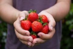 Mogna sommarjordgubbar för handfull