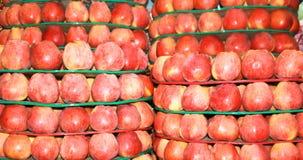 Mogna söta röda äpplen Arkivbilder