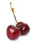 mogna svarta Cherry Royaltyfri Foto