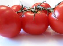 mogna tomater Arkivfoton
