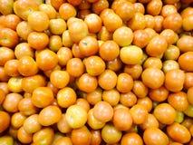 mogna tomater Royaltyfria Foton