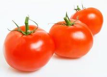 Mogna tomater. Arkivbilder