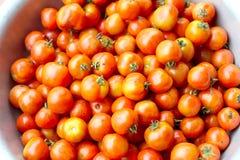 Mogna tomater Fotografering för Bildbyråer