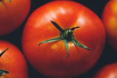 Mogna tomater Royaltyfri Bild