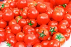 Mogna tomater Arkivfoto