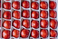 mogna tomater för askbehållare royaltyfri fotografi