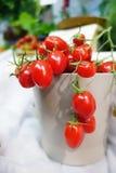 mogna tomater för Cherryred Royaltyfri Foto