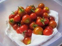 mogna tomater för Cherryred Royaltyfri Fotografi