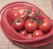 Mogna tomater i en röd korg Grupp av tomater Arkivbilder