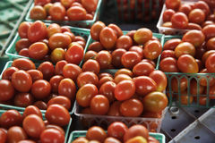 Mogna tomater i fack på bondemarknaden Arkivbilder