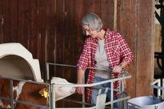 Mognad lantgårdkvinna med kalven Royaltyfri Foto