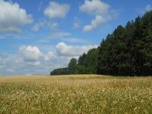 Mognande sädesslag för fält Arkivfoton