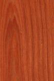 Mogno (textura de madeira) Fotografia de Stock
