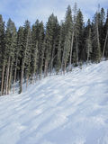 Moguls on a ski hill and pine forest Stock Image