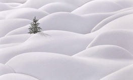 Moguls and tree Royalty Free Stock Images