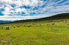 Mohär-Bauernhof Stockfoto