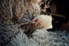 Mohacs Baranya/Ungern - FEBRUARI 26 2017: traditionella deltagare kallade busoen av busojarashändelsen som hjälper sig att klä arkivfoto