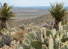 Mohave Krajowa prezerwa, szeroki pustynia krajobraz obrazy stock